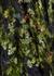 Black floral-devoré midi dress - Preen By Thornton Bregazzi