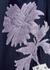 Navy printed midi dress - Tory Burch
