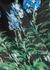 Santon floral-print satin skirt - Dries Van Noten