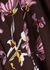 Burgundy floral-print midi dress - byTiMo