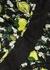 Issey lemon-print silk midi dress - Diane von Furstenberg