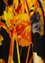 Dali floral-print satin dress - Dries Van Noten