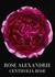 Privé Rose Alexandrie Eau De Toilette 50ml - Armani Beauty